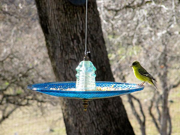Traffic Light Bird Feeder Or Bird Bath Insulator